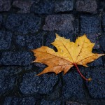 absolutely_free_photos-original_photos-single-wet-leaf-in-autumn-5616x3744_17645-1