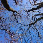 absolutely_free_photos-original_photos-tree-4608x3456_21529